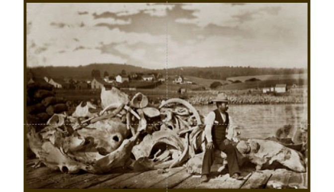 Free Lecture on Sidelights and Details of California Shore-Whaling 1852-1901 Tuesday, April 16.